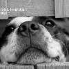 犬も熱中症になるその症状は?室内犬の対策は?散歩は?