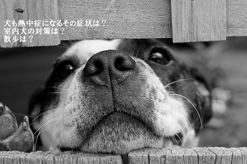 dog-715545_640